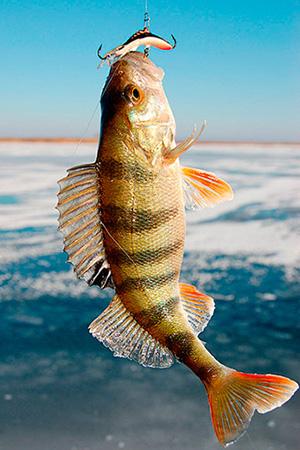 недорогой отдых в Карелии, рыбалка